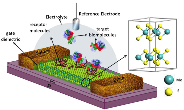 application of carbon nanotubes in medicine